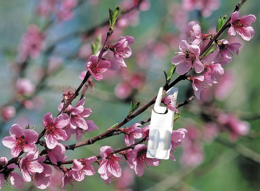 Pesticides le nouvel obs red couvre le fil couper le - Qui a invente le fil a couper le beurre ...