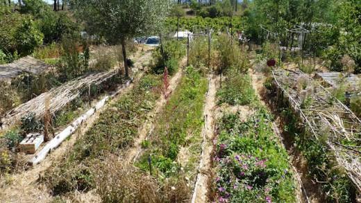"""Jardin Famililal"" au mas de Beaulieu"