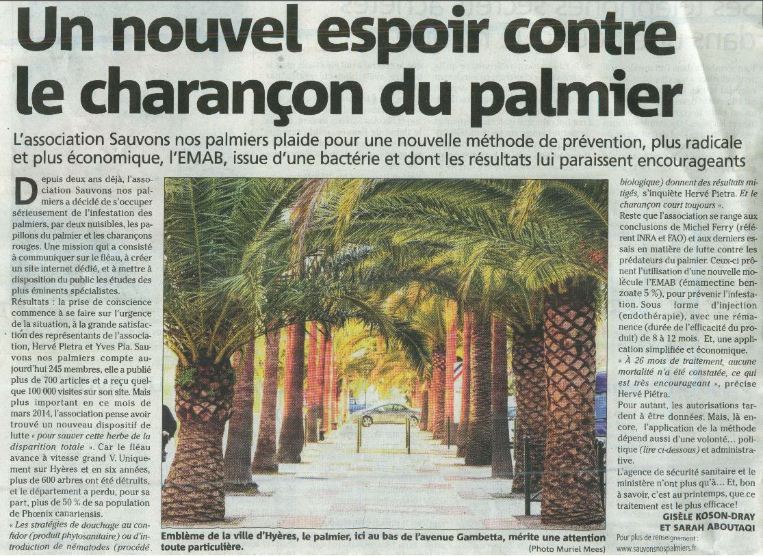 """Résultat de recherche d'images pour """"charançon rouge du palmier"""""""