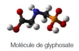 1503MoleculeGlyphosate