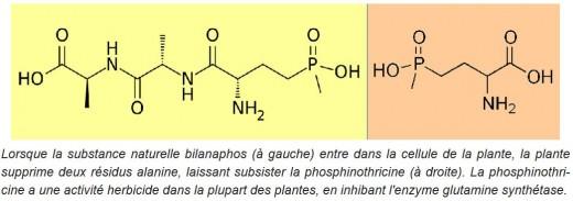 1601PhosphonitricineGlufosinate