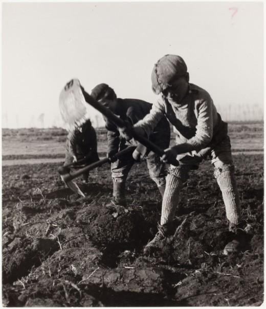 Limiter le travail pénible (et celui des enfants) est un des bénéfices de l'usage des pesticides, non comptabilisé dans l'étude de Guillemaud et Bourguet.