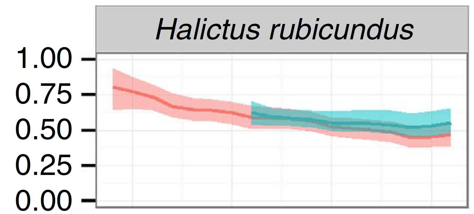 1609HalictusRubicundus