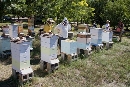 En Alberta (Canada), des apiculteurs s'opposent à une possible interdiction des néonicotinoïdes